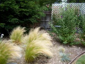 Grasses & Butterfly Bushes