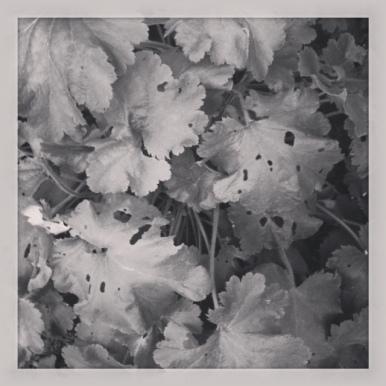 photo-102